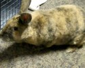 92.5 The Chief Pet of the Week 12 11 13 Acorn 0 00 44-12